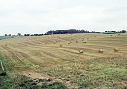 Post-harvest landscape on the edge of Hucknall